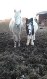 Olivia and Moo