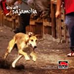 pn022 Pajamolía