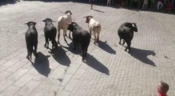 La manada entra en la plaza @lasarribestaurinas