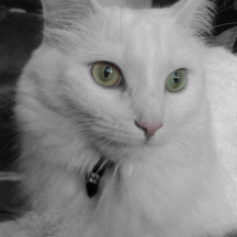 Black and white of my cat Panger, color focus on her eyes and nose