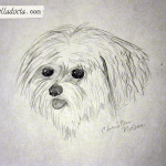 Pencil sketch of Boopie, the family dog