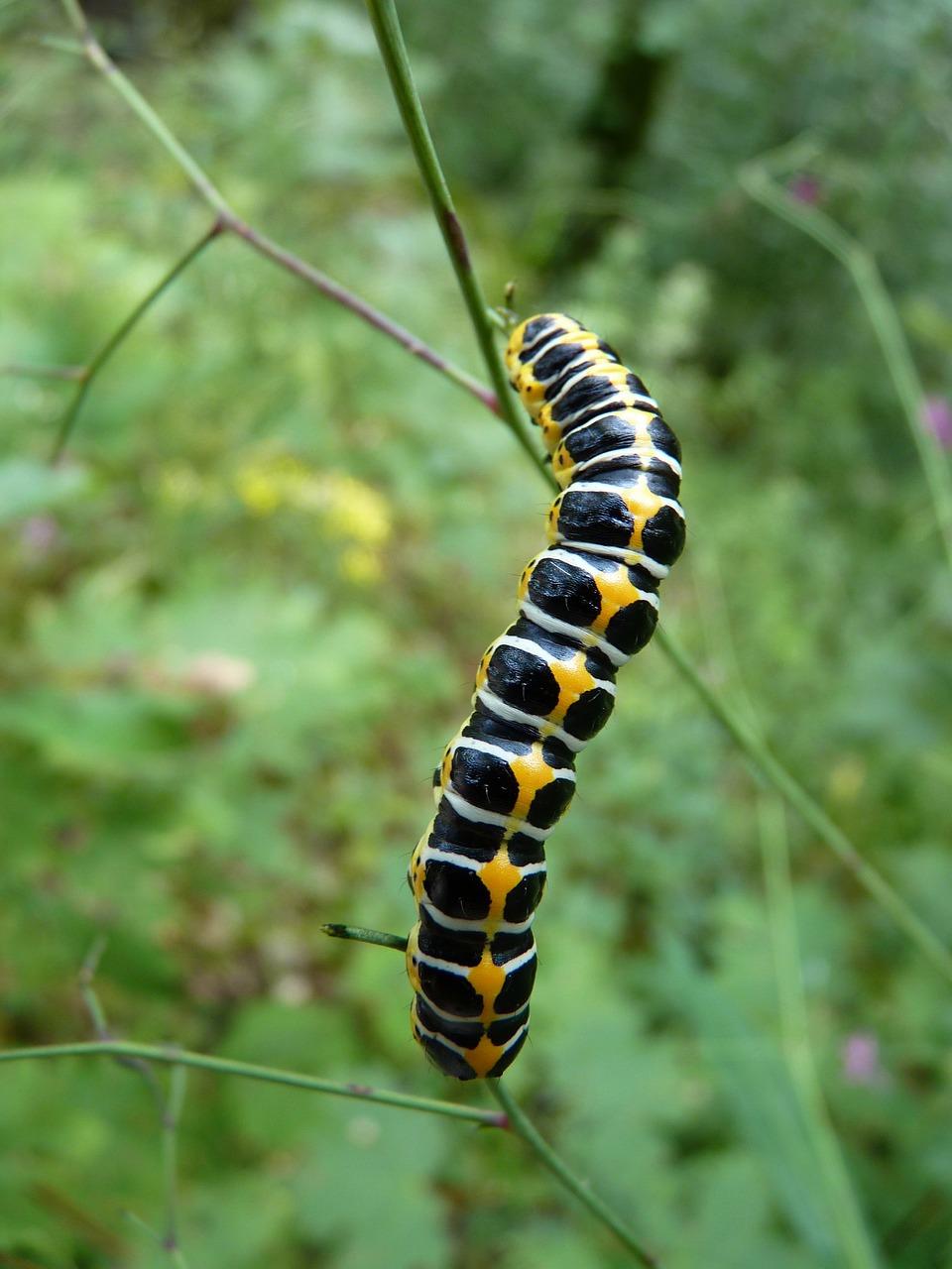 caterpillar-4804_1280