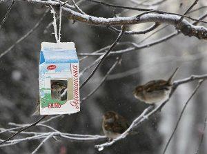Taller medioambiental de cajas nidos en el Parque de los Toruños.jpg