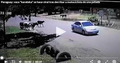 "Paraguay: vaca ""karateka"" se hace viral tras derribar a motociclista de una patada"