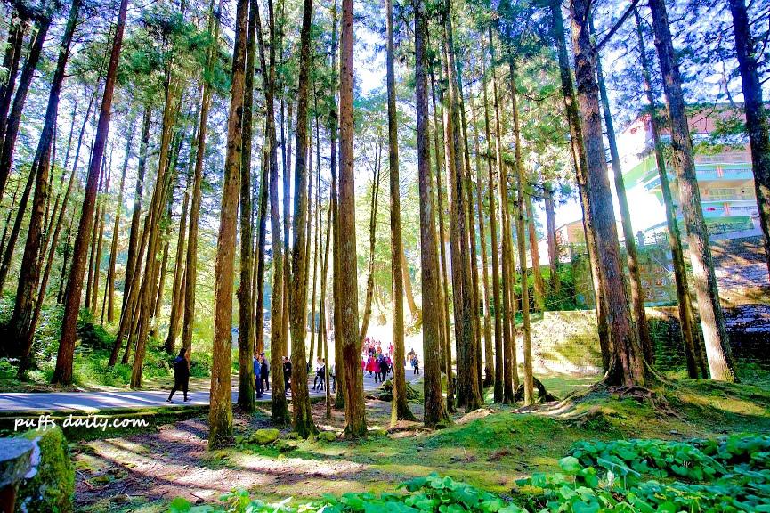 阿里山森林遊樂區神木區
