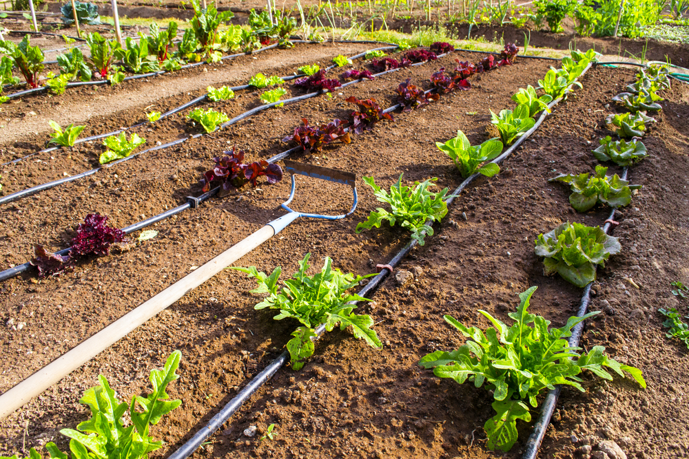 Above Ground Watering Systems