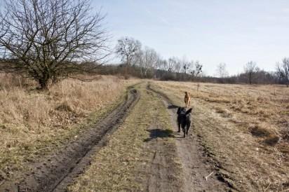 Trasę do lasu pokonałyśmy taką oto drogą z dzikimi łąkami po obu stronach.