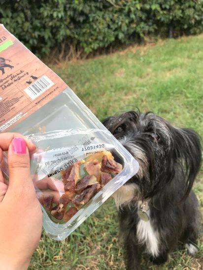 Bu natomiast to wytrawny wydziwiacz, który potrafi odmówić zjedzenia wiejskiego królika. Zgarodowe smaczki wchodzą bez szemrania. No może nie sardynki :P ale ten pies ewidentnie nie gustuje w rybach :)