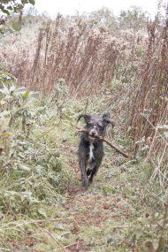 Momentami kierując się do przejścia w stronę lasu przychodziło nam przejść przez takie właśnie wysoki, wysuszone trawska.