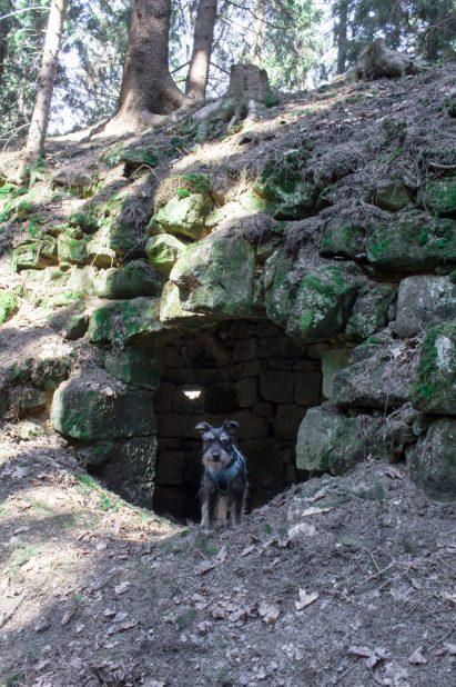 Pufiozaur i Fort Wilhelma.