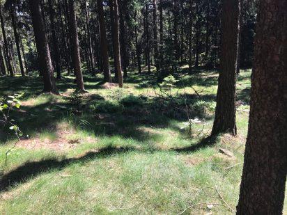 ... dużo urokliwych leśnych ścieżek.
