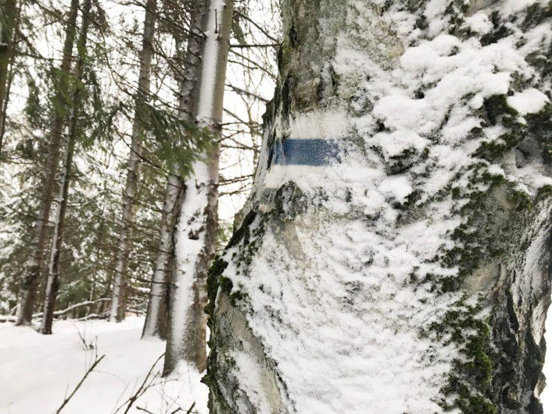 a tak zimą często wygląda oznakownie szlaku, łatwo je przeoczyć więc nic tylko wzmożyć uwagę