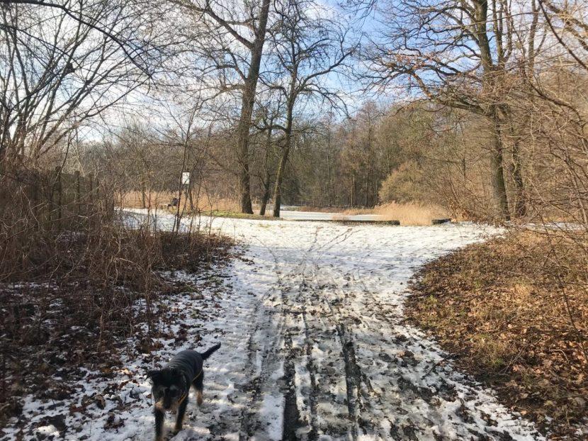 ścieżek jest sporo nawet w samym lesie , więc mimo, że nie jest ogromny jest gdzie pospacerować