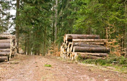 całość dojścia to miły leśny spacer