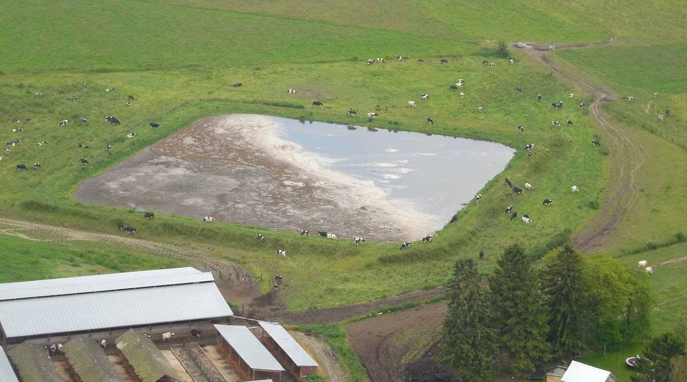 An aerial photo of a manure lagoon, with cows grazing around it.