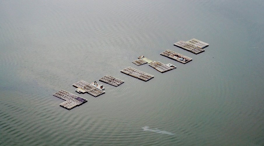 An aerial view of some shellfish farming in open water.