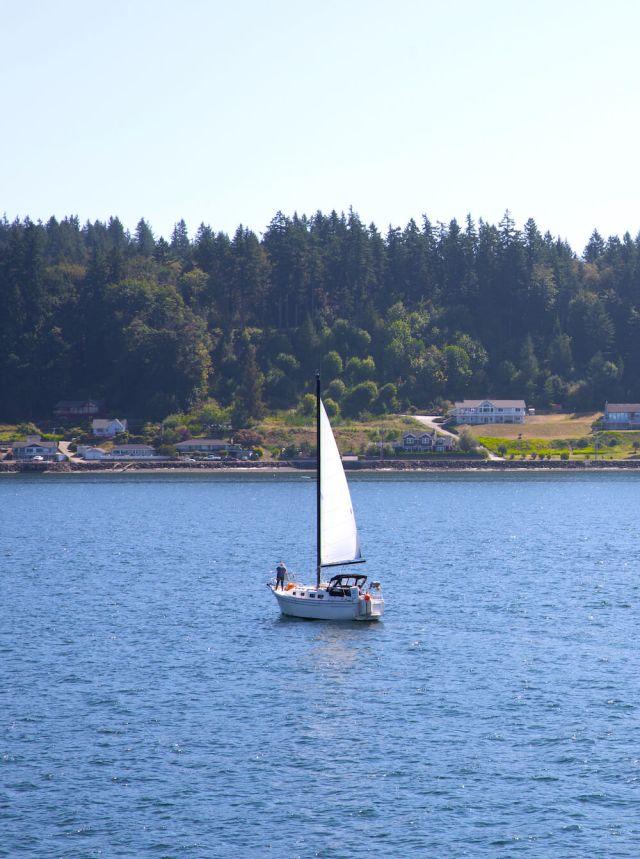 Puget Sound Sailboat - Puget Sound Veterinary Specialists