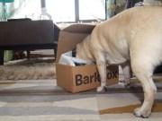 barkbox - 2