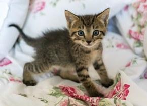 kitten-1517537__340