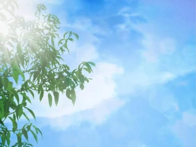 青空と緑の葉