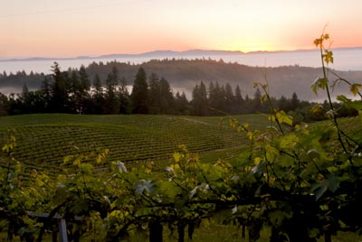 A Taste of Mount Veeder coming to Scottsdale in March