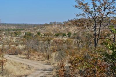 Dirt track through Hwange National Park, Zimbabwe
