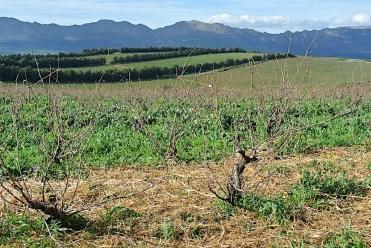 More bush vines