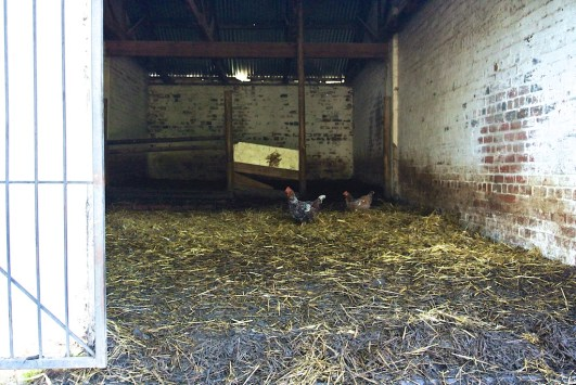 The barn and chickens