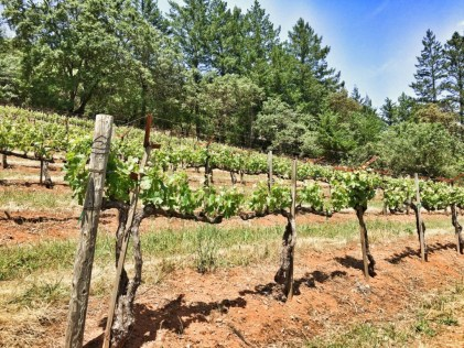VineyardsandForests