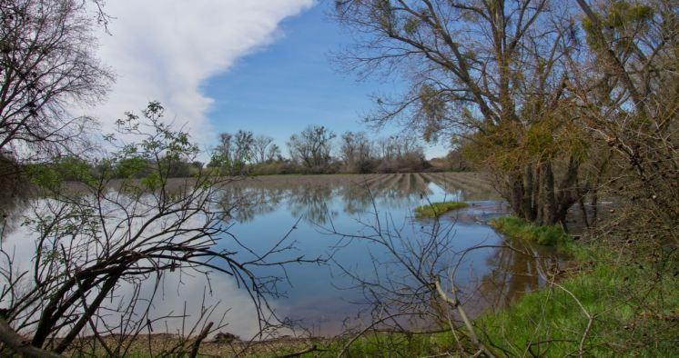 Heritage Oak SB vineyard flooding