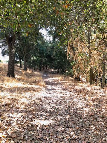 Heritage Oak trail in summer