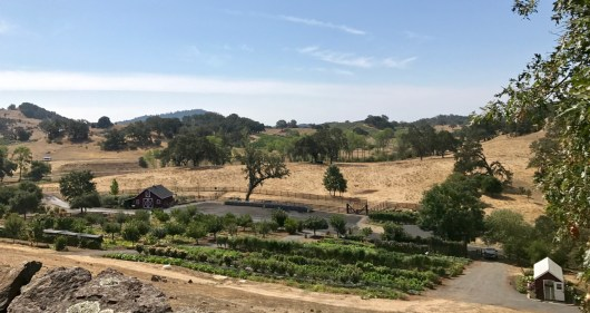 Jordan Winery gardens