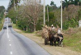 Oxcart in Cuba