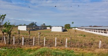 Poultry farm 1