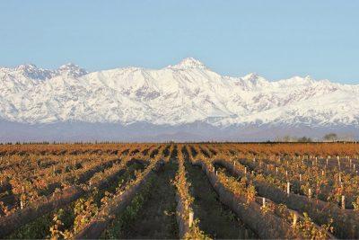 Domaine Bousquet vineyards