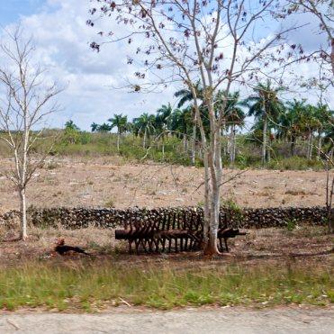 Rusting sugarcane parts1