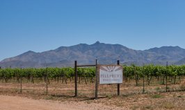 Pillsbury Wine Co Vineyard with Dos Cabezas in the background