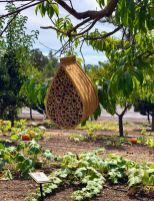 Squash bee habitat