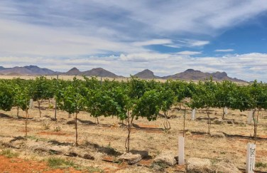 Sonoita Elgin area vineyard