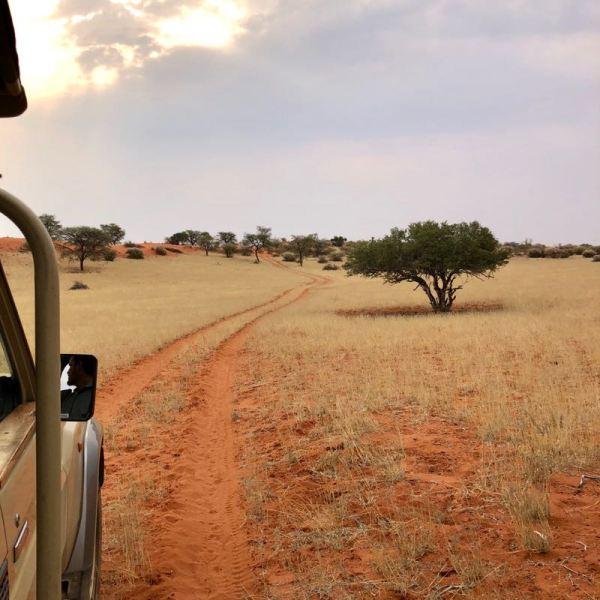 Game drive at Kalahari Anib Lodge