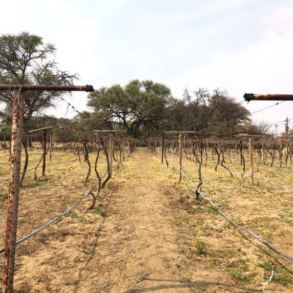 Kristall Kellerei vineyard