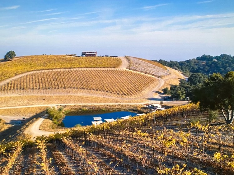 Alta Colina vineyard view photo