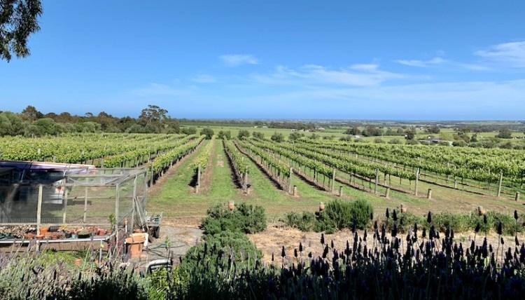 Vineyard views at Danshi Rise photo