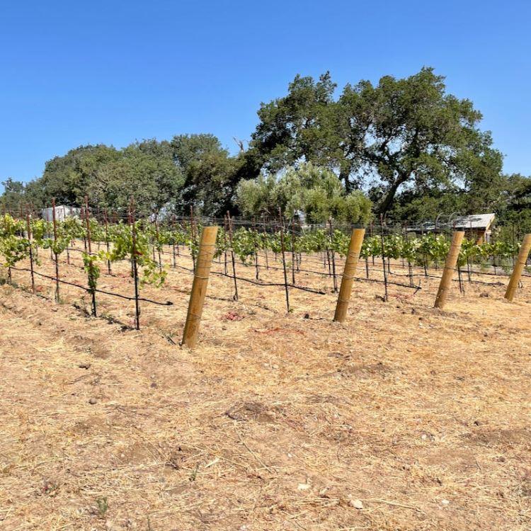 Kindred Oak Farm vineyard photo