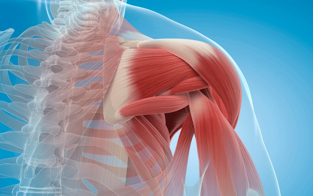 Muscle Soreness Doesn't Predict Future Muscle Strength