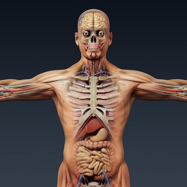 Human Anatomy 3D Model : 3 Human Skeleton 3d   Biological ...