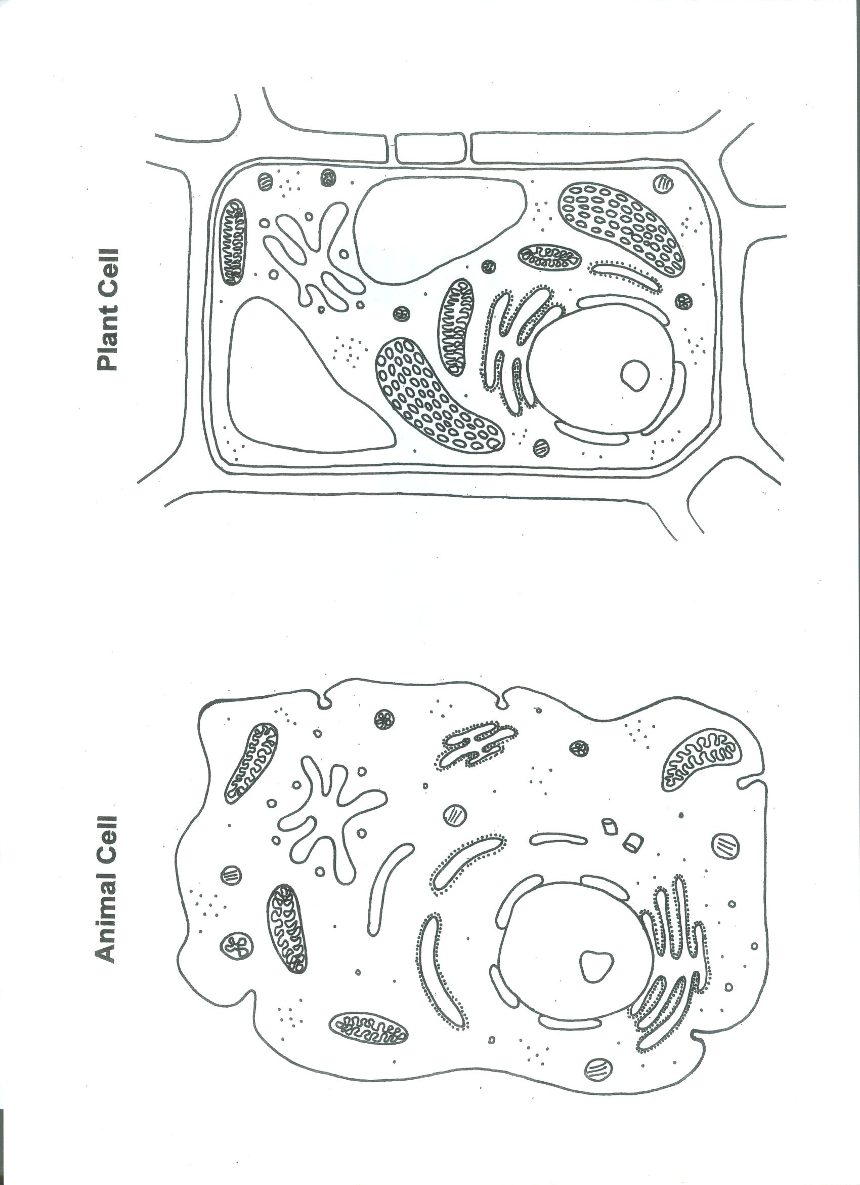 Plant And Animal Cell Color Worksheet Biological Science