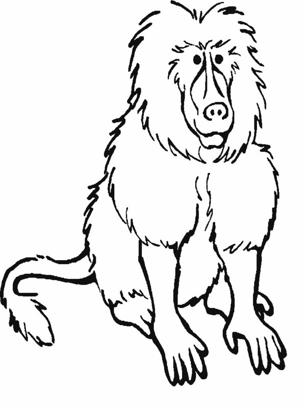 rainforest mammals coloring pages  biological science