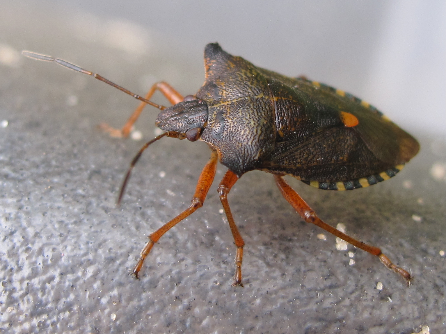 Forest Bug Biological Science Picture Directory Pulpbits