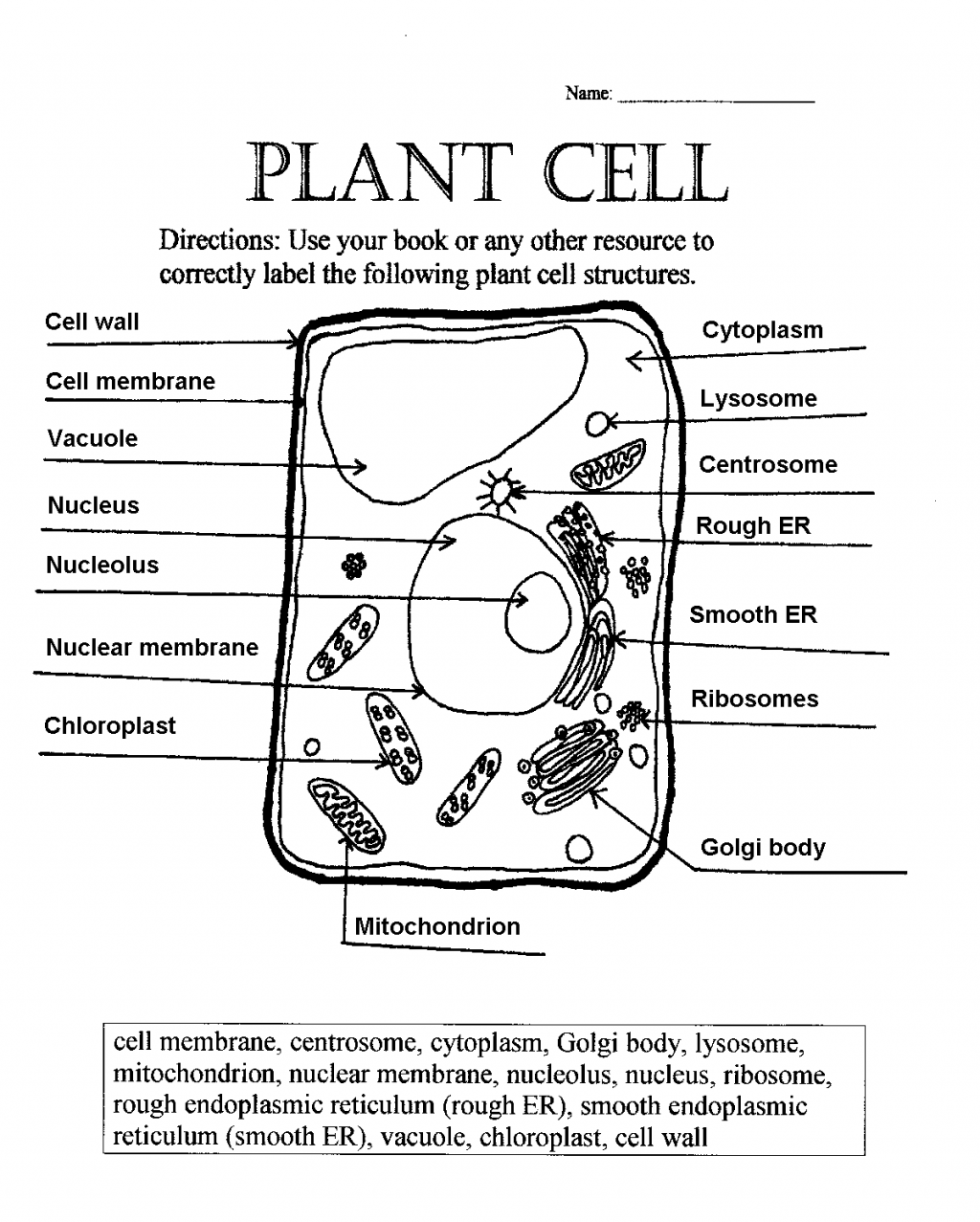 5 Label Plant Cell Worksheet Biological Science Picture Directory Pulpbits